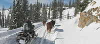 Forest rangers, ranchers save cattle stranded on Buffalo Pass
