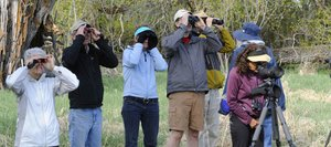 A group of bird watchers view the great blue heron heron during International Migratory Bird Day on Saturday at the Carpenter Ranch.