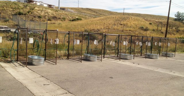 These wash bins behind Murdoch's Home and Ranch Supply will be busy Saturday morning and afternoon as the store will be hosting a Pet Health Fair from 10 a.m. to 3 p.m. The fair will include dog washing, vaccinations, training and grooming tips, along with other pet-related vendors and services at discounted prices or free of charge.
