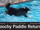 Poochy Paddle