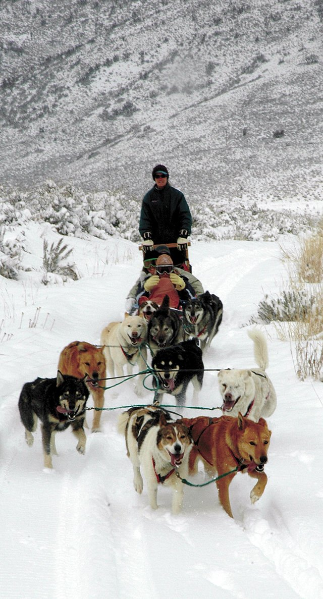 Carol Bloodworth, owner of Red Runner Dog Sled Tours, drives her ten-dog team to break through the fresh powder on trails she takes guests on at Stagecoach State Park.