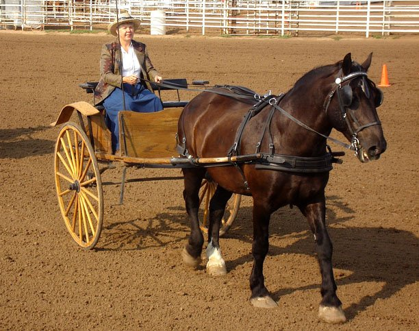 Deb Dunnaway and Dan prepare to negotiate the course during Sunday's Horse Driving event at the Moffat County Fairgrounds. Sharp turns and tightly spaced cones makes the course a challenge for many drivers.