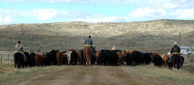 Donna Deakins, left, and two ranch hands bring up the rear of the cattle drive Thursday. After more than four hours, they are almost to the meadow where the cattle will stay until being separated for sale the following day.