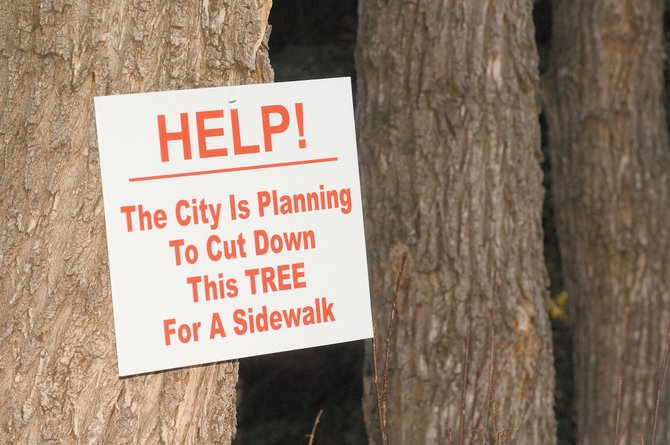 Jackie Grimaldi and Larry Guss have helped post signs on many of the trees that line Pine Street in an effort to draw attention to the city's proposed plan to build uniform sidewalks. The problem is that many of the old trees that line the street - in the public right of way - would be cut down for the sidewalk.
