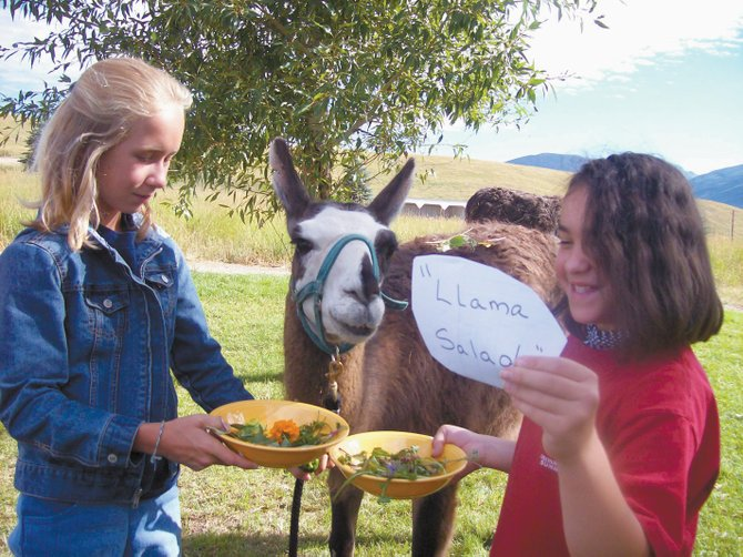 Clients in the Humble Ranch Education &amp; Therapy Mini Camp program feed vegetables to a llama at the ranch in July 2007. 