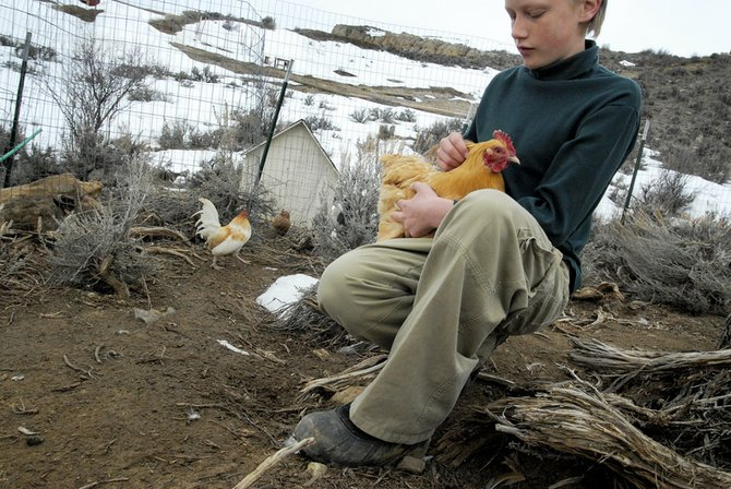 Eli Dixon holds his 3-year-old chicken Sunshine on Thursday at his home in Craig. Eli has more than 40 chickens of various breeds, many he considers as pets.