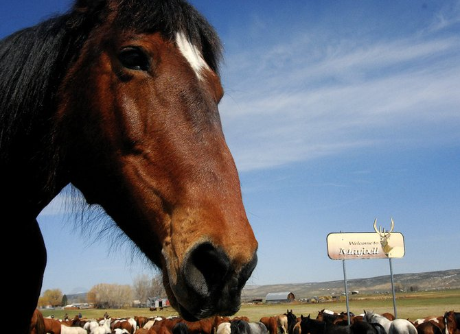 Horses stop for a break on the east side of Maybell on Sunday during the Sombrero Great American Horse Drive.