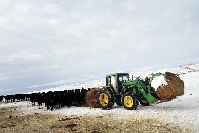 A severe winter provided biting winds and piles of snow and presented numerous obstacles for Northwest Colorado ranchers.