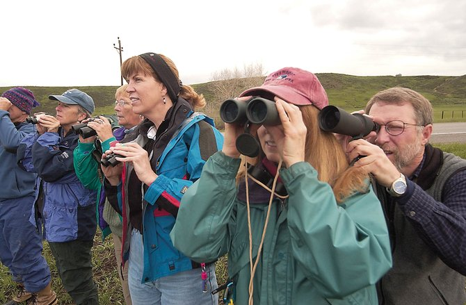 A group of bird watchers stop along U.S. Highway 40 to view a great horned owl and its two young. The group was participating in the Yampatika's 10th annual Birdathon venturing throughout Routt County seeing the many types of birds making home in the area.