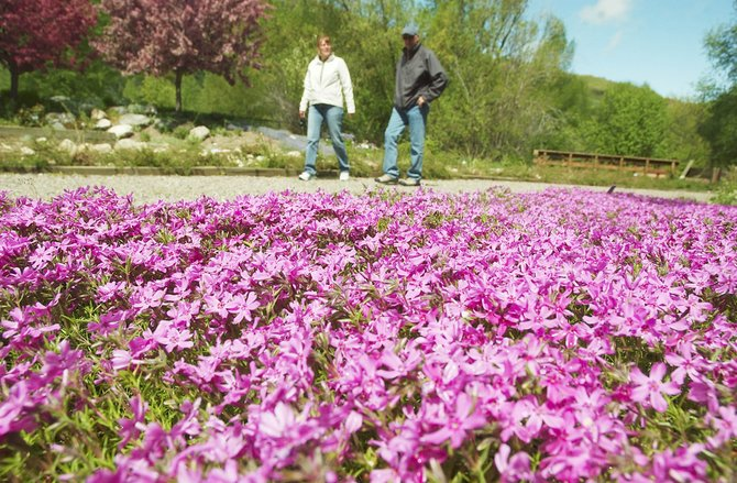 Loveland residents David and Susan Boyd walk past Moss Pink on Wednesday morning at the Yampa River Botanic Park. Local gardeners are excited the weather is finally cooperating with their garden plans.