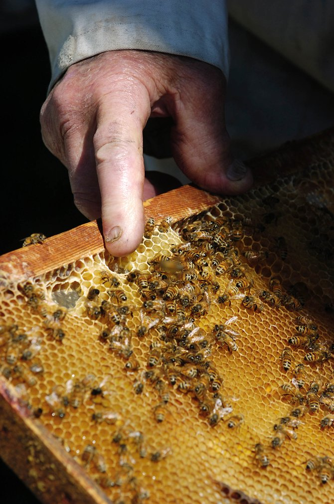 John Fetcher points to the honeycomb being made by bees in one of his four hives.