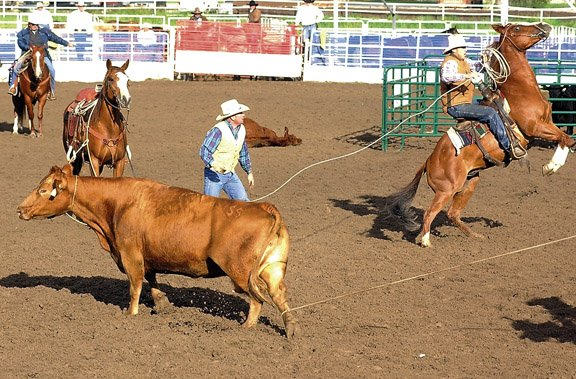 A team of cowboys competes in the 2005 ranch rodeo at Howelsen Hill.  This year's event begins at 5 p.m. Sunday at the Brent Romick Rodeo Arena.