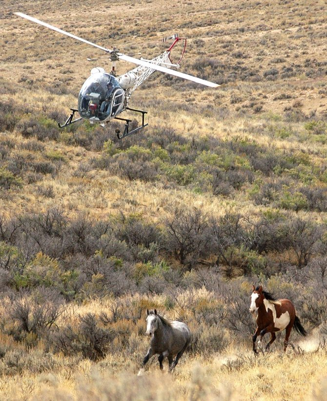 Wild horses take to their hooves at Sand Wash Basin in central Moffat County. The region is one of Moffat County's cultural heritage tourism sites that Cindy Looper, Moffat County Tourism Association board member, said should include more visitor-friendly amenities.