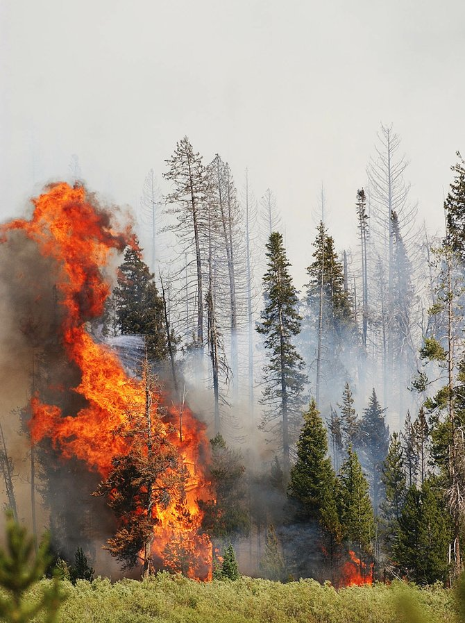 Flames from the New Fork Lakes Fire consume beetle-killed lodgepole pines in late July in the Bridger-Teton National Forest near Pinedale, Wyo.