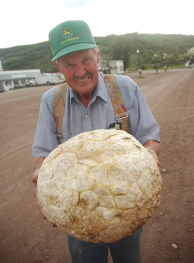 South Routt resident Al Wentworth displays the mushroom he found on a ranch outside Yampa weighing 20 pounds, two ounces.