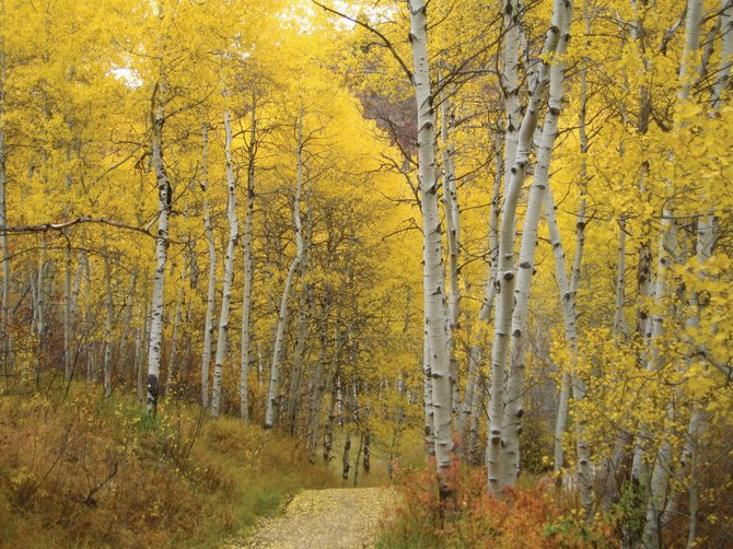 Don't miss out on Colorado's beautiful fall colors.