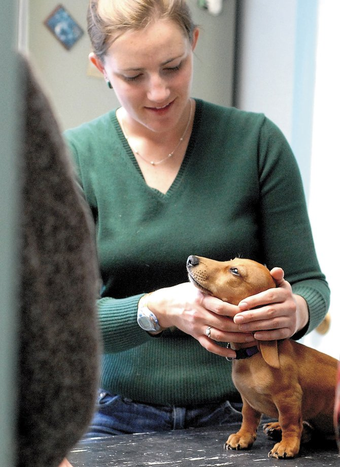 Associate Veterinarian Julie Amick treats a sick dog Friday at Bear Creek Animal Hospital.