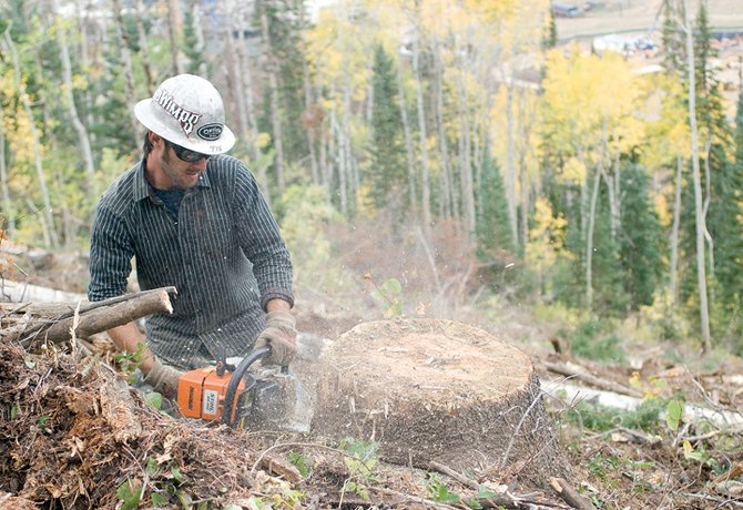 Justin Neilsen of Rogue Resources uses a chain saw to clear the trunks of dead pine trees that were removed from the slopes of the Steamboat Ski Area on Monday. The ski area feared the trees, most of which fell victim to the pine beetle epidemic, presented a hazard to skiers and hikers in the area.