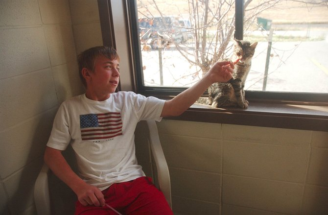 Steamboat Springs Middle School seventh-grader Max May plays with a cat Thursday while volunteering at the Steamboat Springs Animal Shelter.