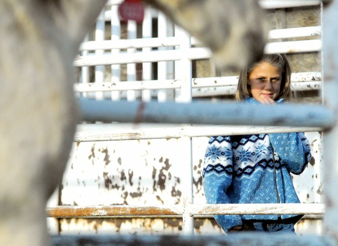 Jewel Vreeman, 10, looks at wild horses Friday at a viewing before the Bureau of Land Management wild horse and burro silent bid adoption. About 20 horses will be adopted. The silent auction will be held this morning at the Moffat County Fairgrounds.