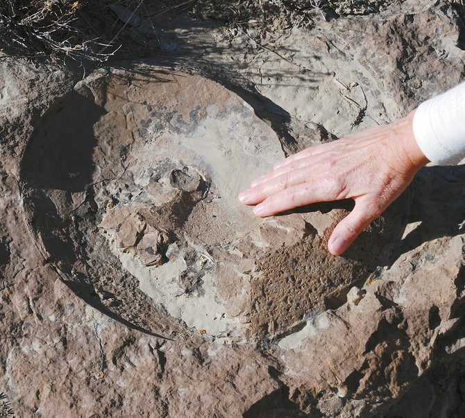 Seventy-million-year-old ammonite fossils are easily viewed on a ridge north of Kremmling. Collecting fossils within the Kremmling Cretaceous Ammonite Locality, however, is forbidden under federal law.
