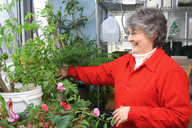 Adjunct biology instructor Judy Goulet inspects plants in a greenhouse at Colorado Mountain College's Alpine Campus. Goulet and assistant biology professor Shawn Sigstedt hope to lead a dozen community members and students on an expedition to the Galápagos Islands in May.