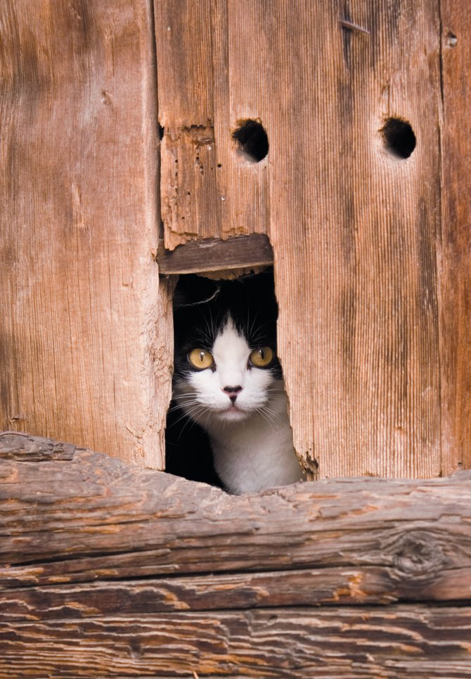 Cats can hide in the haystacks, under buildings and even in a bucket.