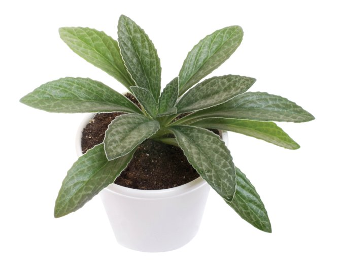 Houseplants prefer temperatures ranging from 55 to 75 F. Most plants adore south- and west-facing windows for the extended light exposure in the winter, but be sure to keep plants from touching the windows, and keep them away from hot or cold drafts.