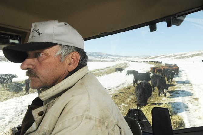 South Routt County rancher Dean Rossi feeds his cattle Friday afternoon. A water dedication policy being considered by the city of Steamboat Springs could have the unintended consequence of creating a local water rights market and drying up the county's treasured agricultural lands.