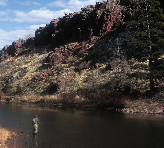 One Utah fishing guide insists that bald eagles are learning hunting tactics from anglers along the Green River below Flaming Gorge Reservoir.