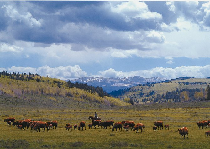 Jay Fetcher herds cattle on his family's ranch in August 2006. Fetcher has won the William Funk Award for Building Stronger Communities, which honors community leaders who can unify people and organizations around a common cause.