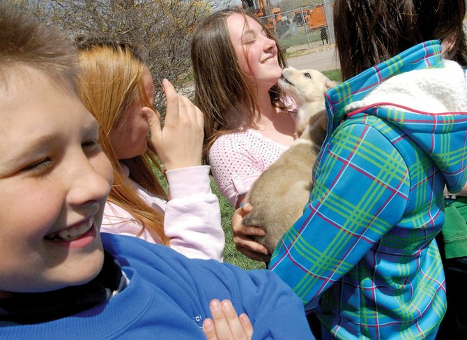 Erica Dilldine, center, gets a kiss Tuesday from one of two puppies currently being housed at Bear Creek Animal Hospital. Dilldine joined 23 other Craig Middle School students who visited the Animal Hospital after donating pet food to the Humane Society of Moffat County. Also pictured are, from left, Matthew Strong, Tanisha Young and Taylor Madigan.