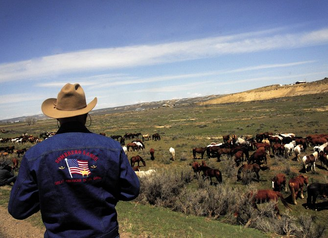 A Sombrero Ranches employee pauses to look onto the herd grazing along U.S. Highway 40 during a rest stop. The annual Sombrero Ranches Horse Drive takes place this weekend. Organizers said they expect to pass through Maybell with the horses about 11 a.m. Sunday.