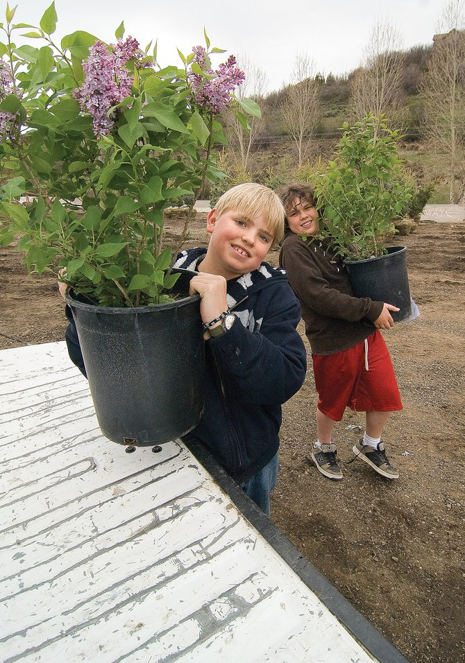 Sixth-graders Andrew Sabia, left, and Oliver Dickhausen load plants into the back of a pickup during Steamboat Springs Middle School&#39;s tree sale Friday morning on the Strawberry Park campus. The sale is a benefit for Everything Outdoor Steamboat.