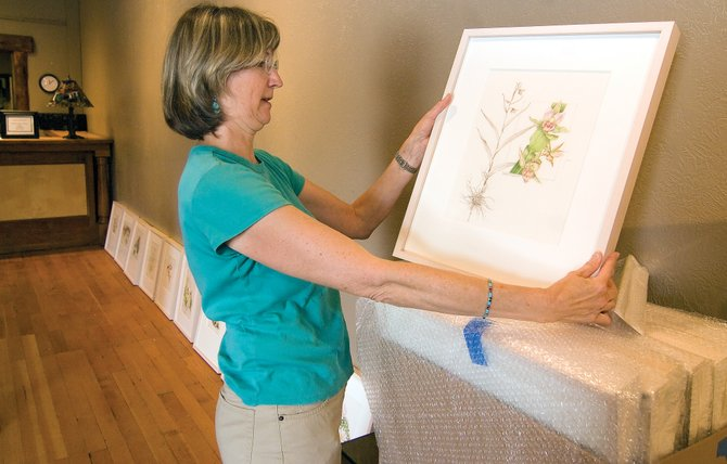 Carol Till unwraps a print for RARE Imperiled Plants of Colorado, a traveling exhibition of Colorado Rare Pants. The exhibit debuted at the Denver Botanic gardens and ran from March 7 to May 17. The exhibit is now open at the Steamboat Art Museum and will run until Sept. 30.