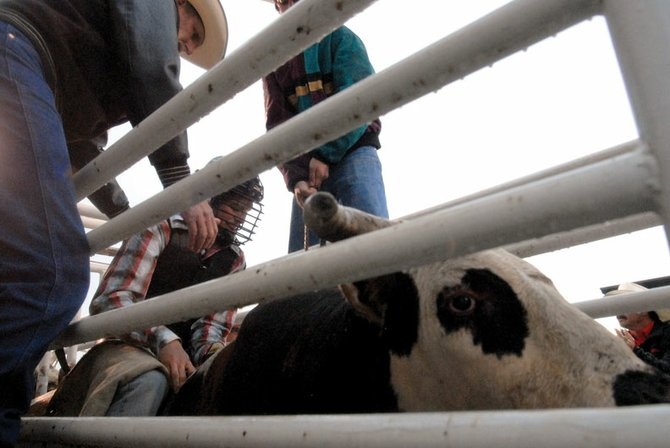 Troy Vernon, middle, readies himself to rush out of the gate. Vernon, who graduated Saturday, will attend Northwest College in Powell, Wyo. on a rodeo scholarship.