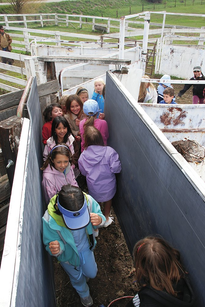 Steamboat Springs youth, then third-graders, squeeze through a cattle chute in May 2008 at the ranch leased by Matt and Christy Belton. The Beltons' ranch is part of this year's Cow Town Ranch Tours, which begin Sunday.