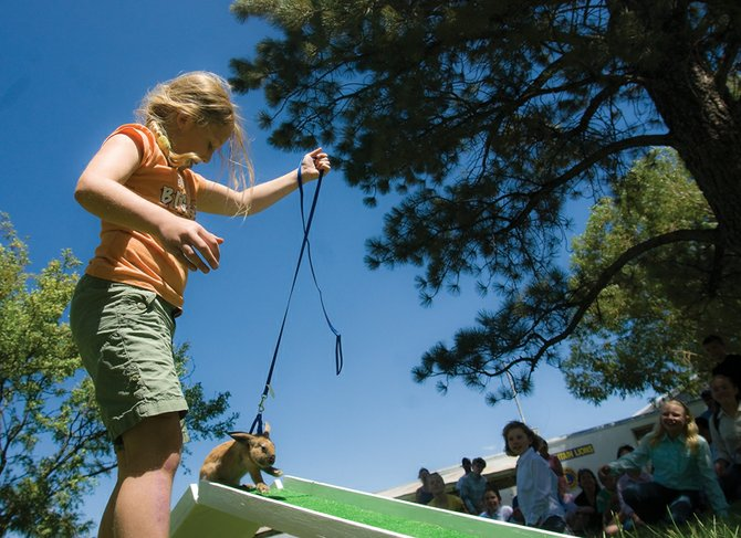 Taryn Gettling, 9, walks her rabbit Brooke through the rabbit agility course at the 91st annual Moffat County Fair. The event challenged 4-H members' rabbits to jump, hop and climb through tunnels.