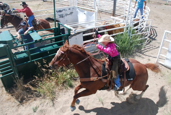 Haleymae Dancer launches her horse into the arena Monday in the first-ever 4-H steer roping competition at the Routt County Fair in Hayden. Dancer finished second in the heading competition.