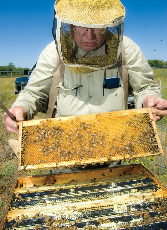 Steve Smith, shown at one of his hives near Loudy-Simpson Park, has been tending bees for 35 years. He keeps 62 hives throughout Moffat County and sells honey, pollen and beeswax to local restaurants and stores.