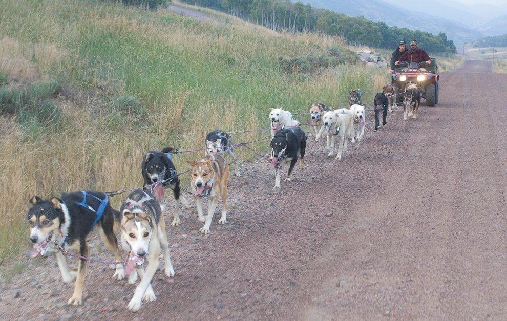 dog photo road - photo #16
