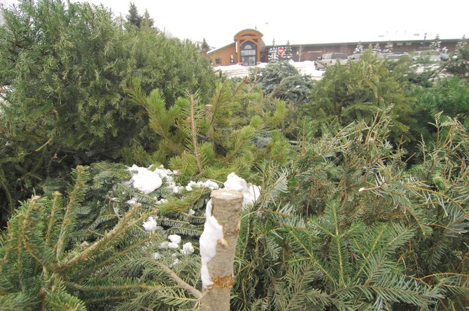 A pile of Christmas trees sits in front of the Howelsen Ice Arena parking lot Tuesday afternoon. Residents can drop off their trees until mid-February.