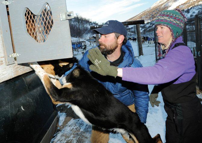 Tom and Tami Thurston load dogs at their Oak Creek Canyon home before a Saturday morning dog sled tour. Tom Thurston is preparing for his second run in the Iditarod dog sled race in Alaska.