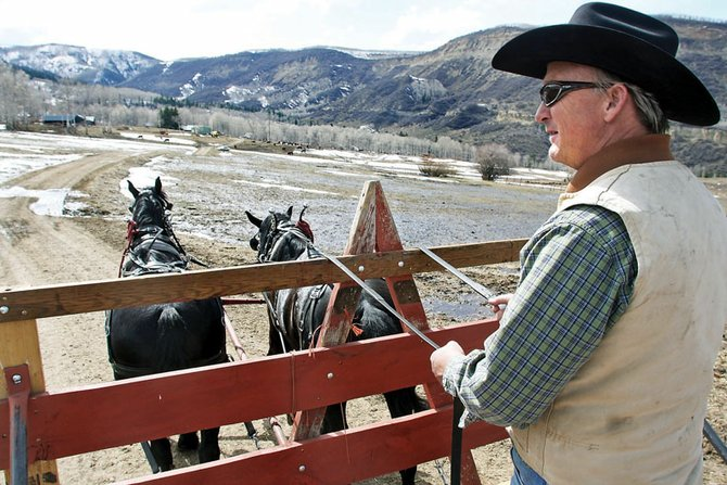 Melton Sullivan drives Percheron draft horses toward his home Wednesday at the Sullivan Ranch near Pagoda. Sullivan served more than seven years on The Memorial Hospital board before resigning his position April 6.