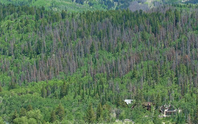 Dead pine trees line the ridgeline behind the Sanctuary subdivision where homeowners have declined to participate in the city's massive logging project to mitigate impacts from the bark beetle epidemic.