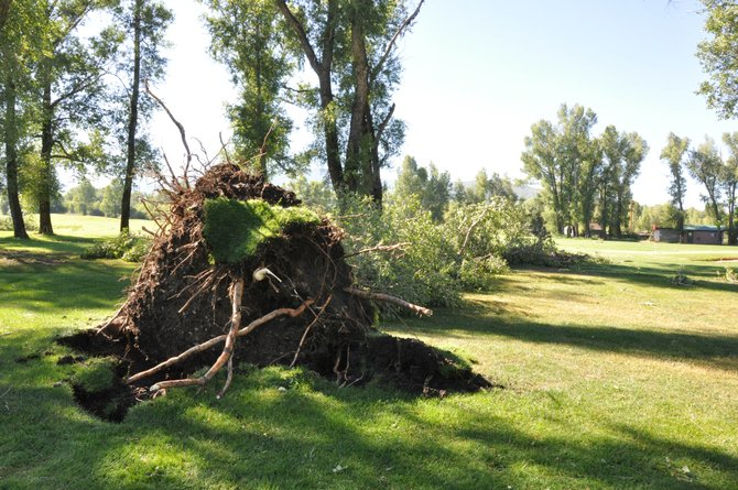 Wednesday's thunderstorm in Steamboat Springs uprooted at least 20 cottonwood trees on the Steamboat Golf Club course. The course is closed until the trees are removed.
