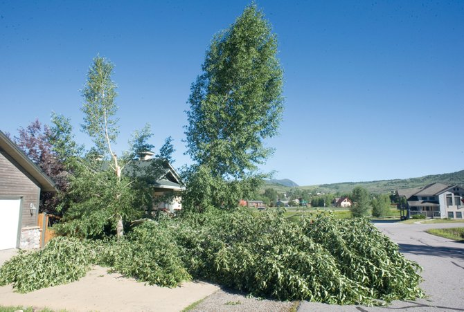 A tree lies in the driveway of a home in the Heritage Park subdivision Thursday morning. High winds associated with thunderstorm Wednesday night knocked down dozens of trees in the area.