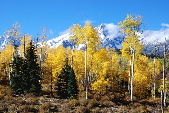 If you have a long weekend during the fall color season, and you haven't seen the San Juans in full splendor, it's worth making the long drive to Ridgeway between Montrose and Telluride.