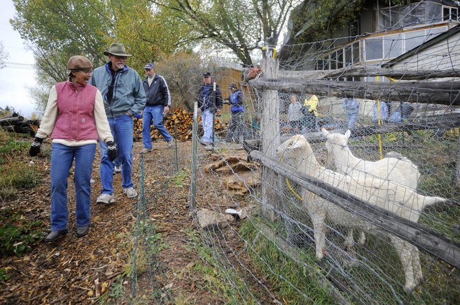 Organizer Betsy Rapp leads the Transition Steamboat Urban Garden Tour past John Fielding's goats Saturday morning.