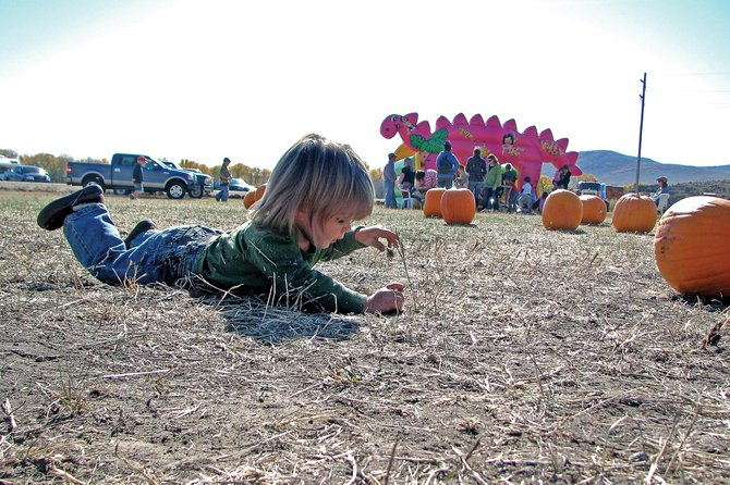 Lexington Bergstrom, 1, plays Saturday on the grounds of the Wyman Museum. The museum hosted its second annual Pumpkin Patch to raise money for the Winter Festival in February. The event raised more than $4,000.